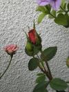 Image2601