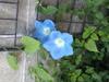 Image1017