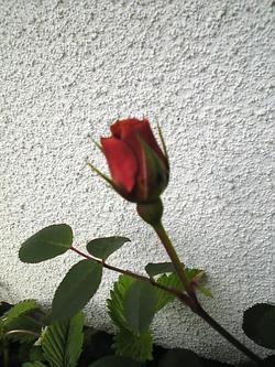 Image394