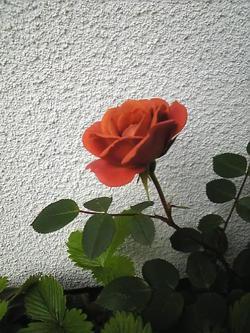 Image405