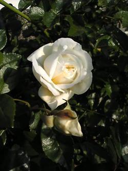 Image364