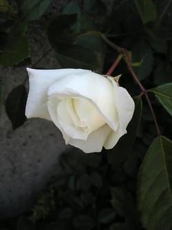 Image3421