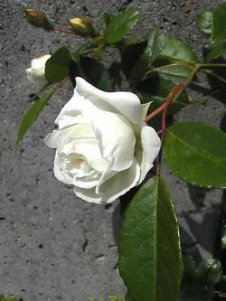 Image378