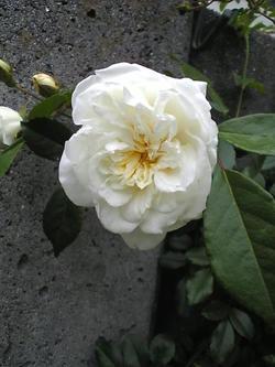 Image3781