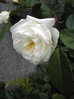 Image392