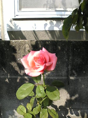 Image459