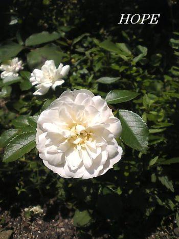 Image163