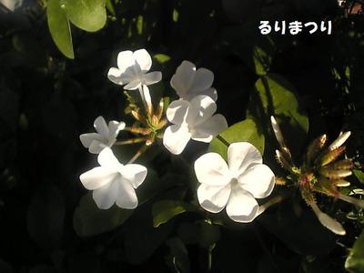 Image036_2