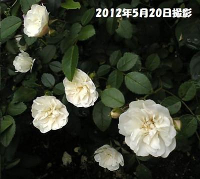 Image104_2